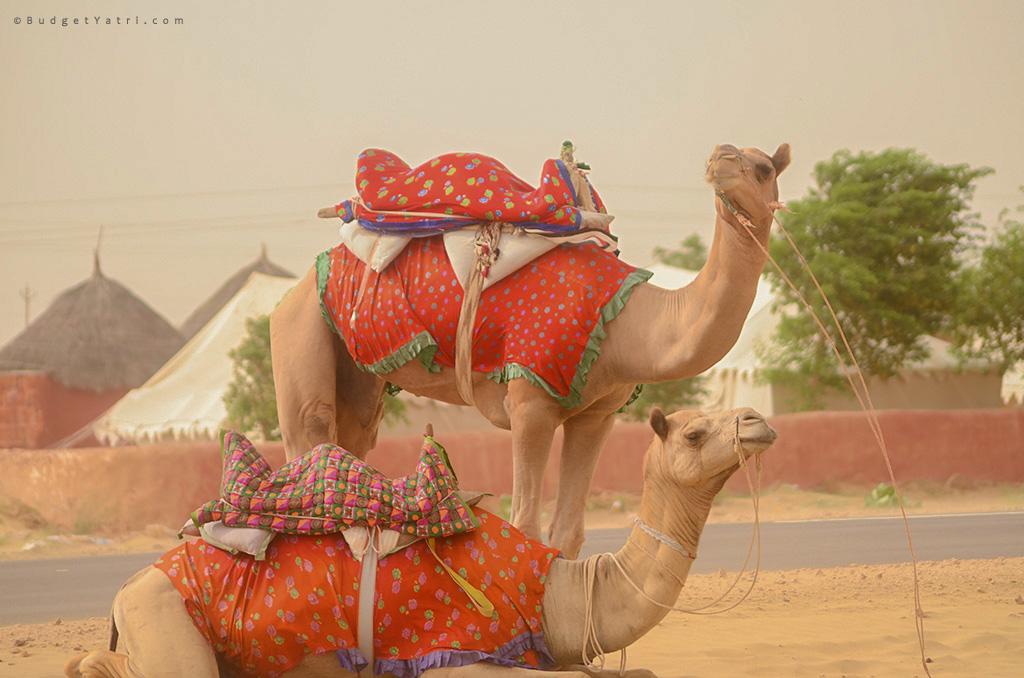 Desert-safari-sam-jaisalmer-rajasthan