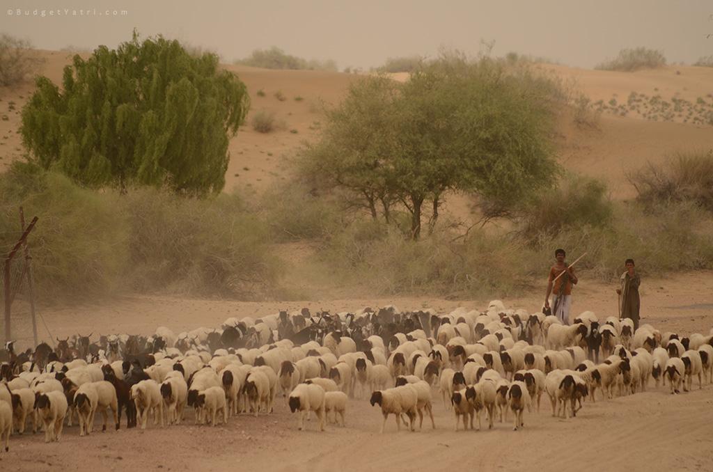 Shepherd-Longewala-border-post