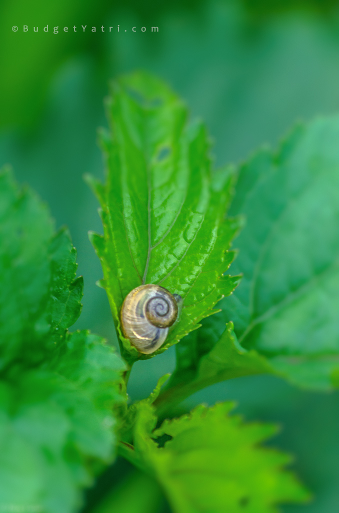 baby snail on leaves, mother nature cares