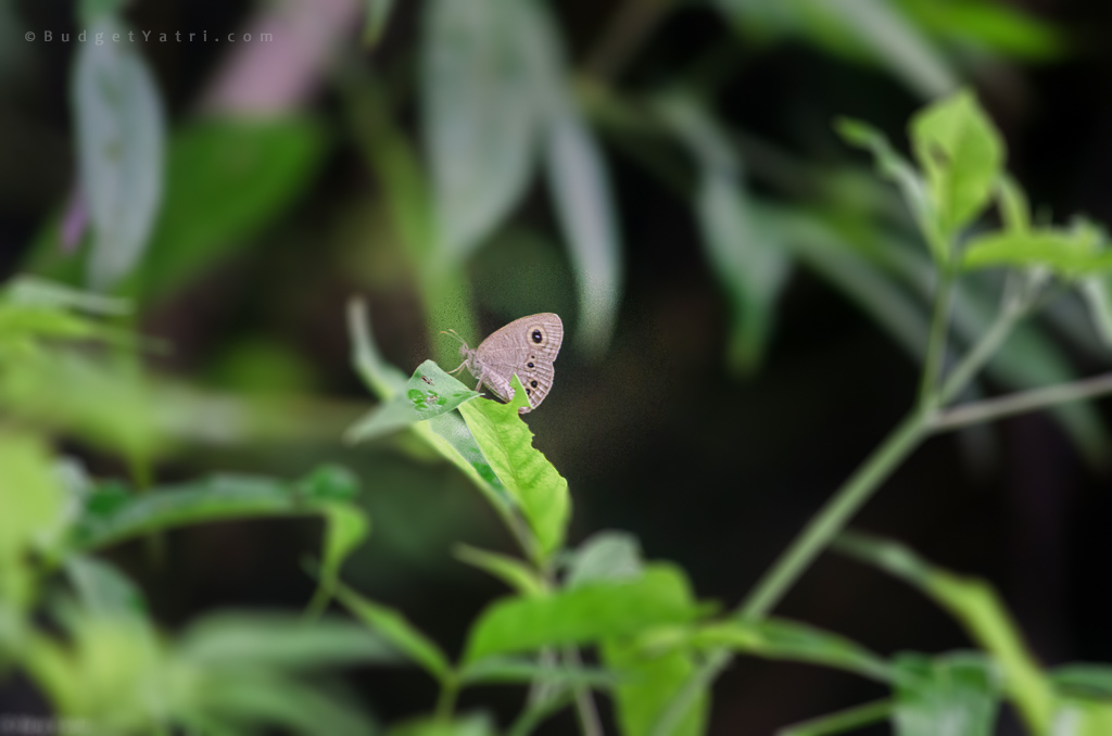 butterfly on leaf raigad