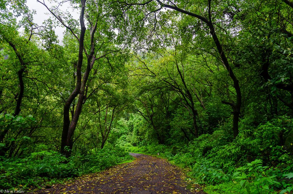 raigad-forest