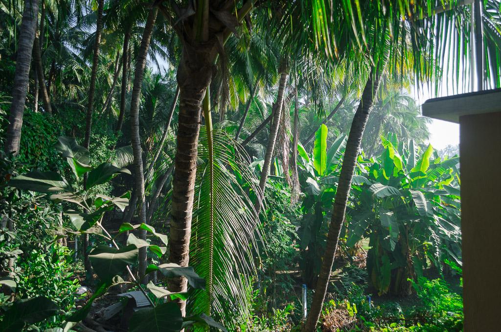 green-backyard, bordi-beach-rooms, bordi-photos