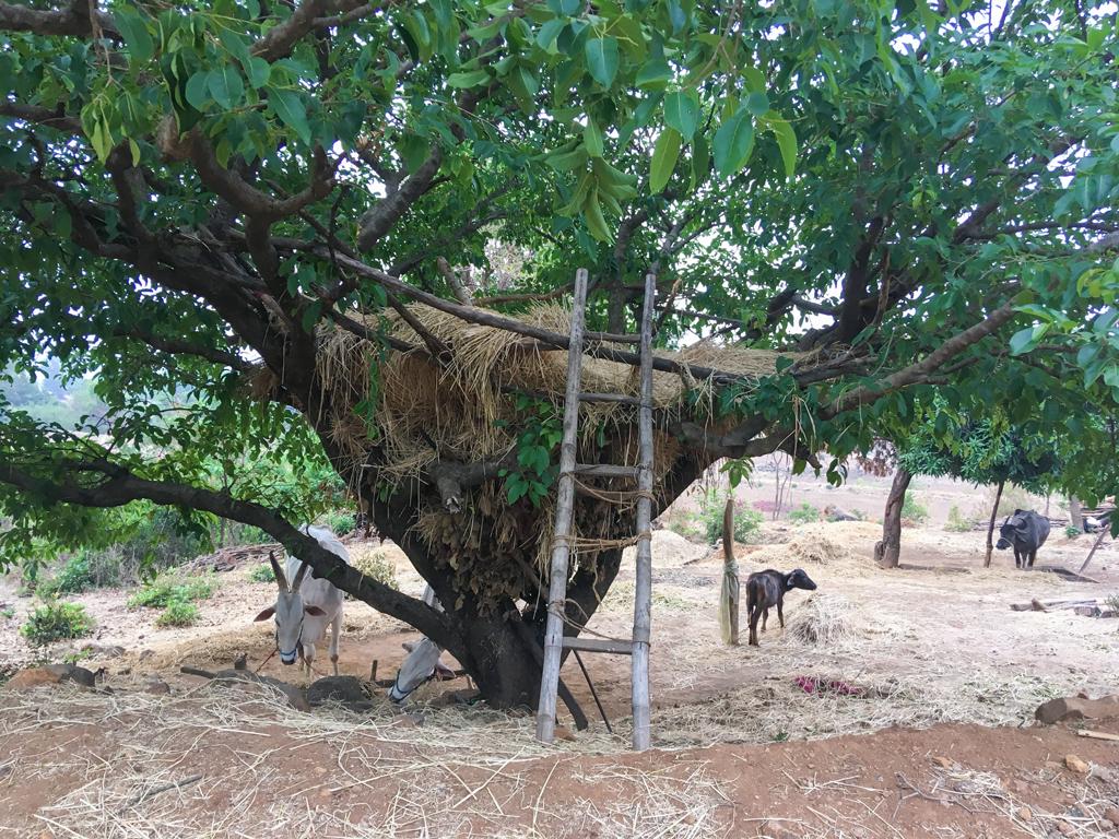 Tree house Maharashtra, Malshej Ghat farming